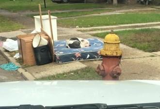 Переезжая, семейство оставило  после себя, не только мусор. Заметив это, сосед забил тревогу! (5 фото)