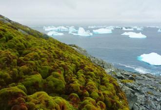 Антарктида начала стремительно покрываться зеленью