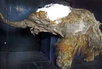 8 интригующих находок, обнаруженных внутри мумий (8 фото)