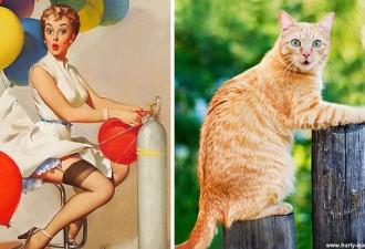 Кошки которые позируют как фотомодели (12 фото)