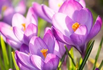 «Я бы не советовал вам срывать эти цветы»