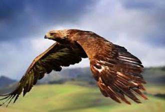 В тот момент, когда орёл наконец доживает до свой старости, он делает весьма удивительную вещь…