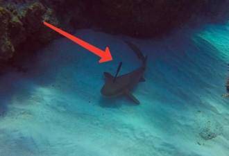 Акула воспользовалась единственным шансом на спасение — попросила помощи у людей (видео)