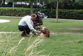 Этот мужчина каждый день приходит в парк с коляской. Но кто в ней — вы удивитесь! (3 фото)