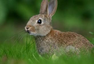 Убойное сочинение про зайцев…