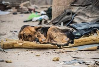 Он лежал посреди груды мусора на небольшой порванной подушке (5 фото)