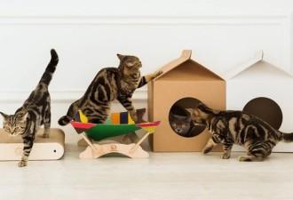 Какие аксессуары для домашних любимцев сейчас в тренде и как сделать кошачий домик своими руками (3 фото)