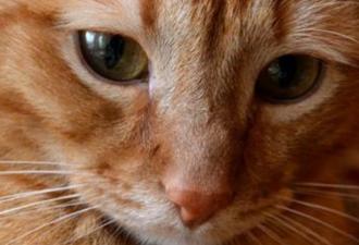 Трогательная история о кошачьей верности