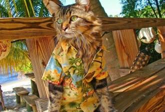 Кот-стиляга от Джоан Бионди (10 фото)