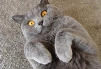 Кот наконец показал, кто в доме хозяин