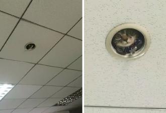 В обычный рабочий день служащие в офисе заметили, что за ними кое-кто следит! (3 фото)