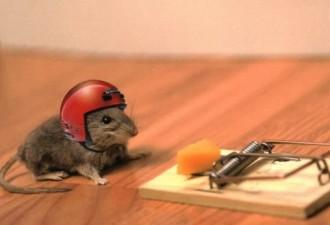 Однажды мышь обратила внимание, что хозяин фермы поставил мышеловку…