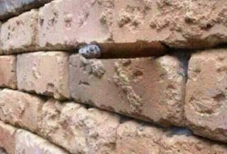 Оптическая иллюзия со стеной
