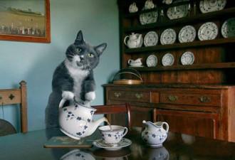 Каким должен быть идеальный кот (10 фото)