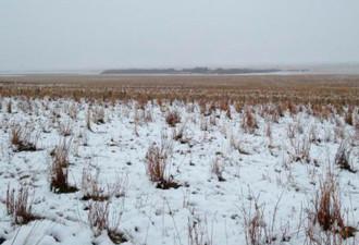 550 овец, исчезнувшие посреди бела дня в поле (4 фото)