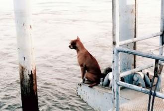 Собака ждала свою семью, месяц не сходя с пристани! (5 фото)