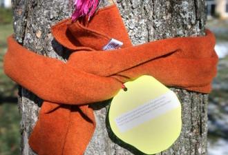 Если вы увидели шарф на дереве, не спешите искать его владельца! Вот что это значит (3 фото)