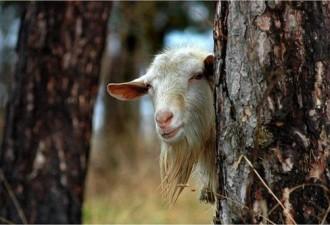 Вот козёл!