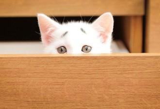 Вечно обиженный котёнок (7 фото)