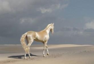 Встречайте самую редкую и красивую лошадь в мире! (6 фото)