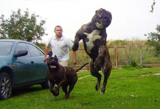 Мамаша закатила скандал, когда её сын захотел забрать собаку у чужого дяди