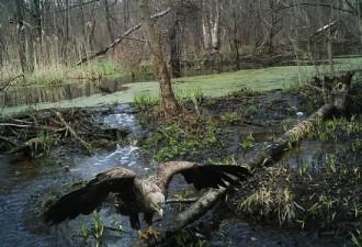 То, что ученые обнаружили в чернобыльском лесу, поразило весь мир! (6 фото)