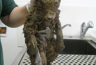 Строители нашли в грязи животное, которое сначала никто не мог опознать (2 фото)