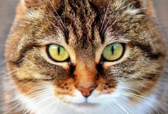 Кошки на самом деле лечат от болезней, но не так как все привыкли думать