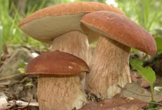 Хороших наверное грибов съели! :)