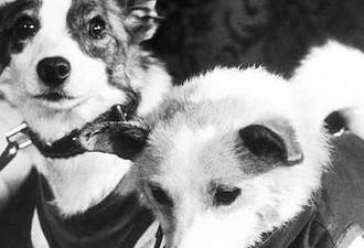 Лайка: трагедия первой собаки в космосе (7 фото)