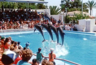 Что происходит с дельфинами, когда заканчиваются гастроли? Жуткая реальность! (7 фото)