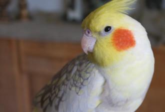 Как мой попугай научился ставить брагу и что он вытворяет в пьяном угаре…