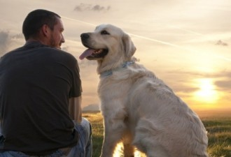 Один дома, не считая собаки. Желанная свобода оказалась не такой уж сладкой…