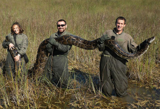 Эти гиганты захватывают Флориду, и никто не может их остановить (3 фото)