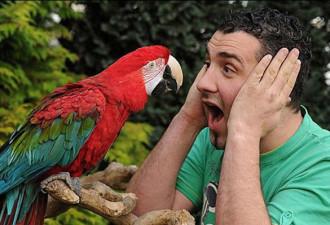 Однажды мужику подарили попугая, дорогого и красивого! Одна беда, он страшно ругался…