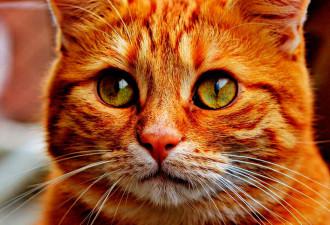 Кот сбился со счета, теряя жизни — не поверил бы, если б не видел своими глазами
