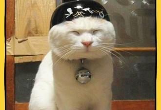 Как в разных странах подзывают кошек (10 фото)