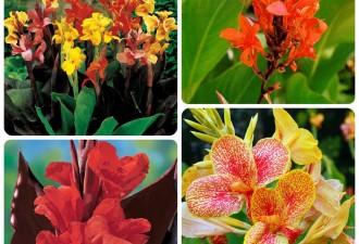 5 необычных тропических цветков