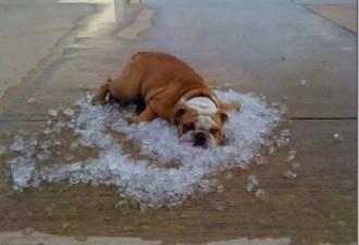 Эта беспощадная жара. Весёлые фото (10 фото)