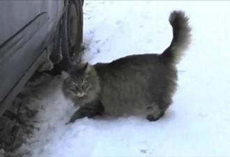 Кошка, обнаружившая коробку с жуткой находкой, стала настоящим героем! (5 фото)