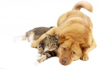 Когда кот решил прокормить всю нашу семью: меня, себя и пса Бакса… От души!
