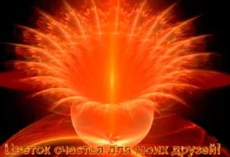 «ЦВЕТОК СЧАСТЬЯ» загадываешь желание и оно сбудется через 2-3 дня!