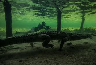 Кто и как снимает крокодилов?