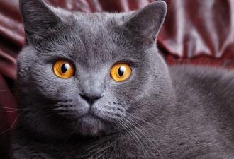 Когда хозяин узнал, куда его кот ходит каждый день, он был очень удивлён (2 фото)