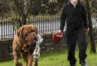 Родители заметили, что пес всегда находился справа от мальчика (3 фото)