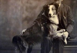 История собаки, которая прошла более 4000 километров, чтобы добраться домой