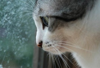 Домашний кот из-за ссоры хозяев совершил необъяснимый поступок