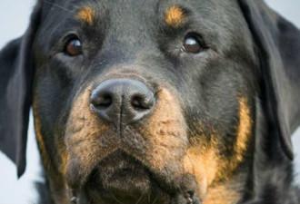 Эта собака спасла жизнь своему хозяину (4 фото)