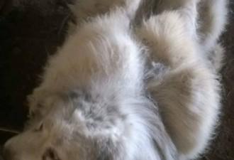 В грязи за дверью лежал совершенно заросший пес (фото, видео)