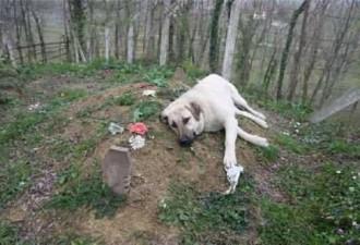 Пёс стал пропадать где-то целыми днями, проследив за ним хозяин увидел это… (2 фото)